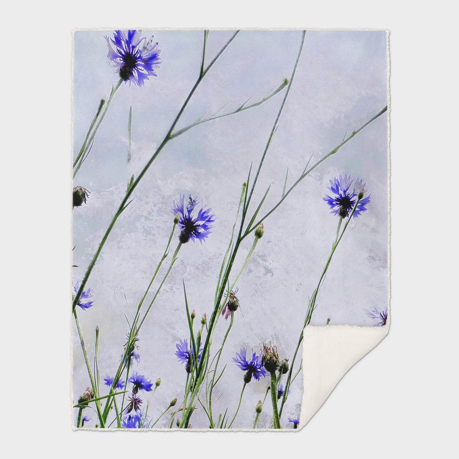 corn flowers blue