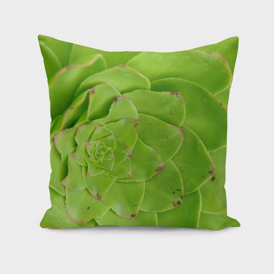 Geometric Green Succulent