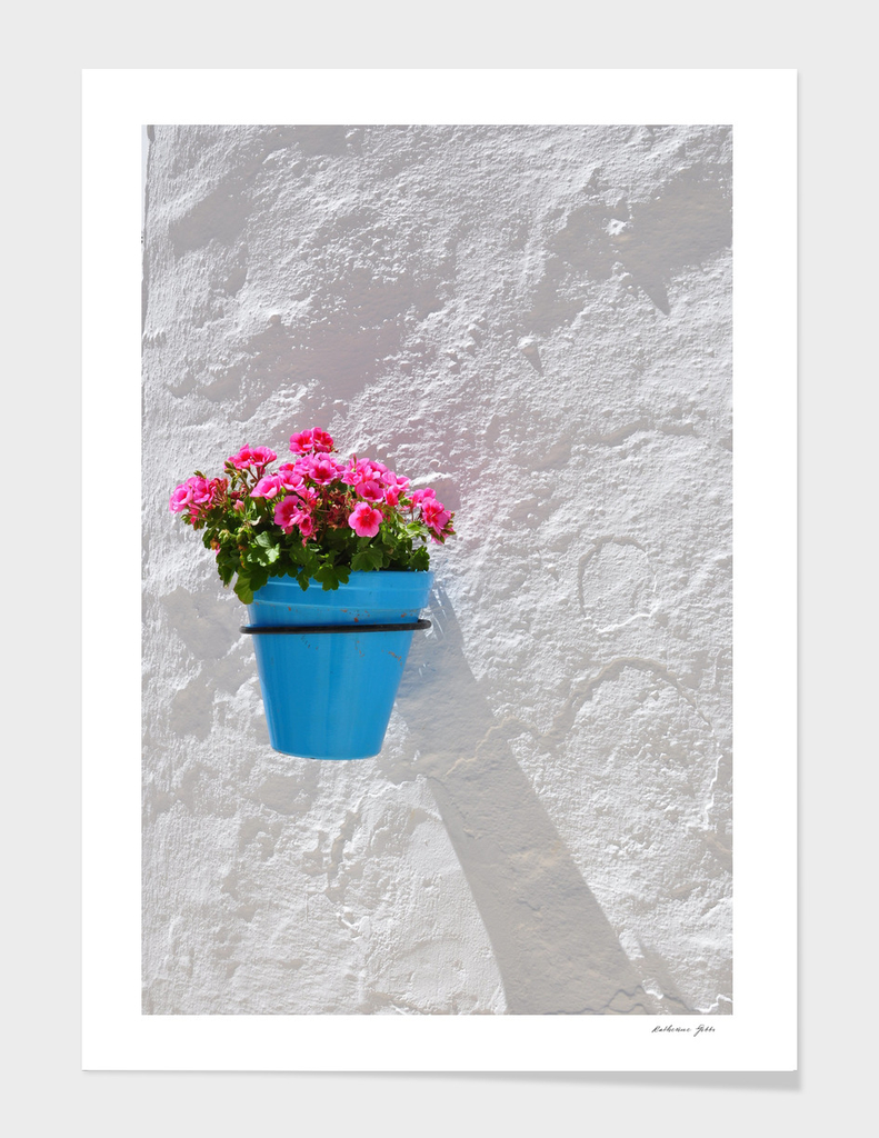 Pink Geraniums in Blue Pot on White Wall