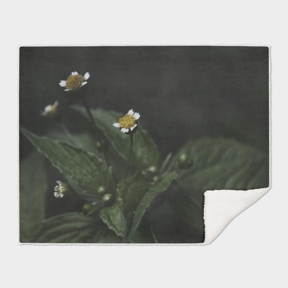 Botanical Still Life Chamomile