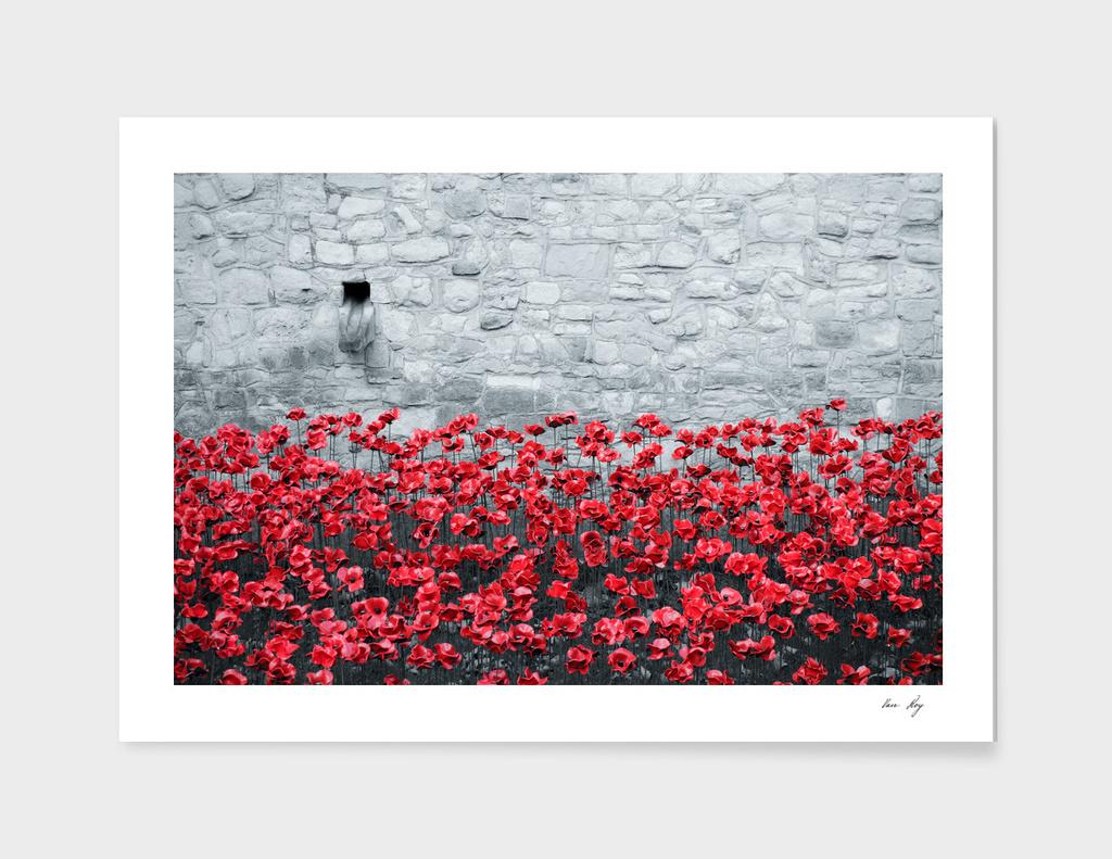 Tower Poppies 02B