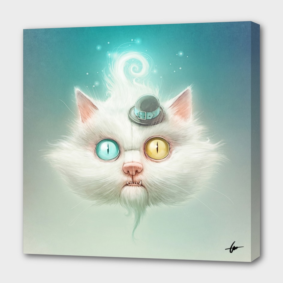 The Odd Kitty