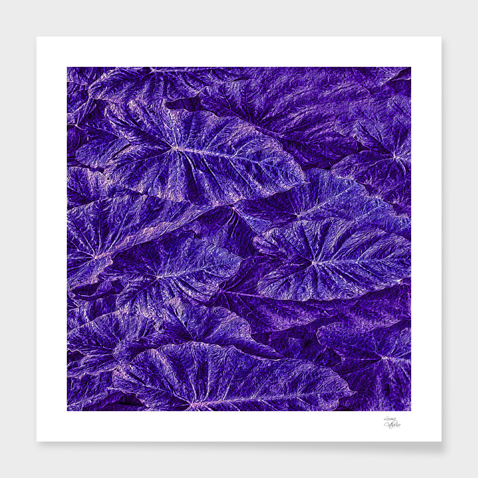 Purple Passion Leaf Pattern