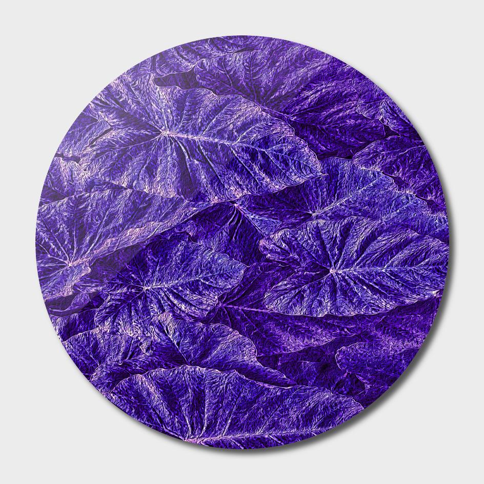Purple Passion Leaf Pattern