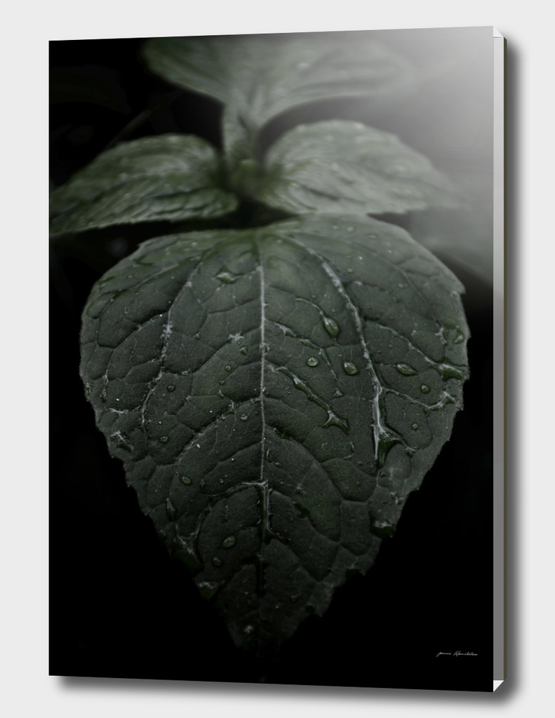 Botanical Still Life Photography Drops On Leaf