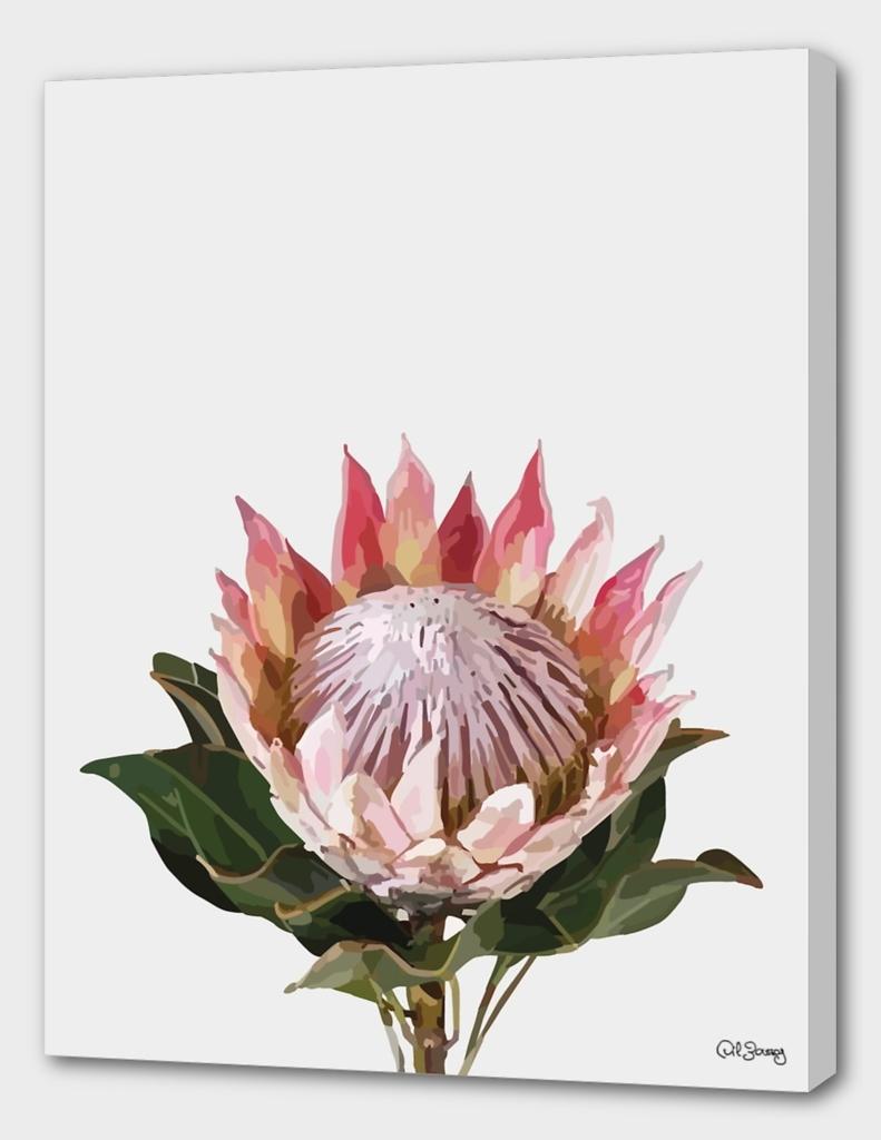 Lone king Protea
