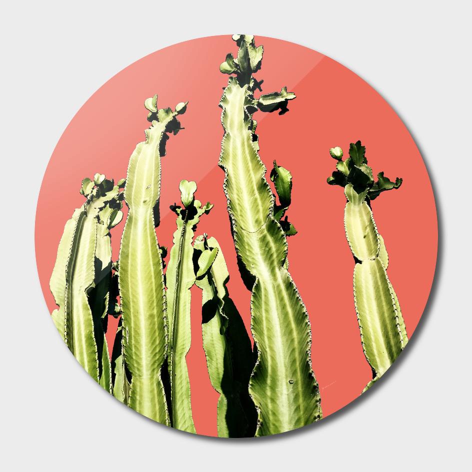 Cactus - red