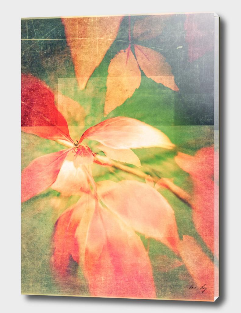 Autumn Colour Field
