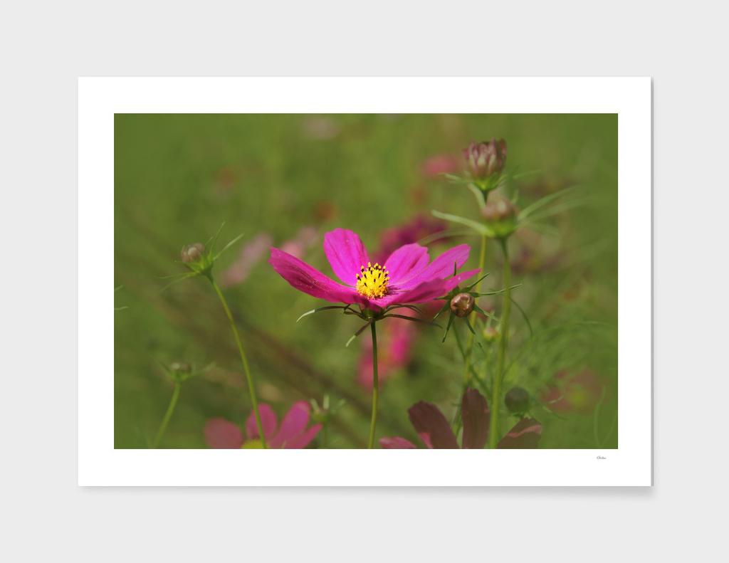 Floral Spotlight