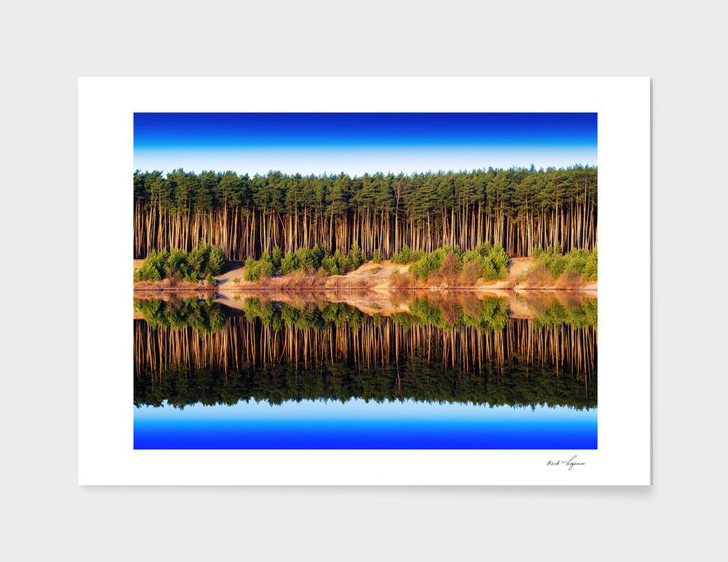 Dramatic forest reflections