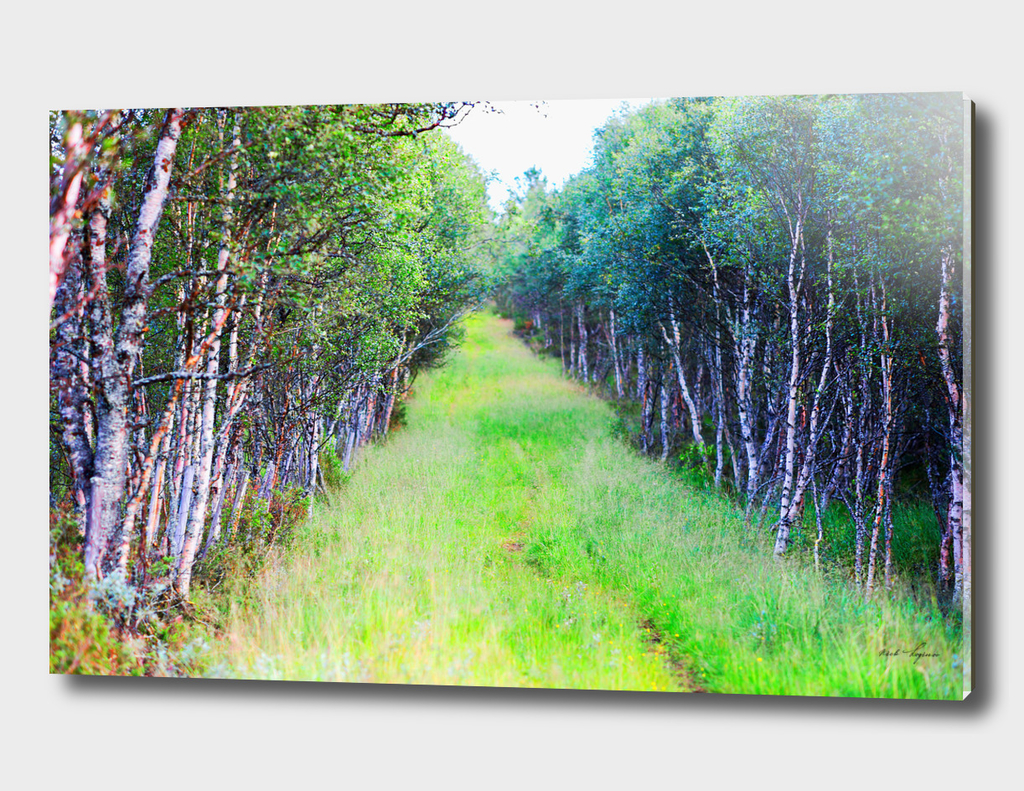 Dramatic forest path