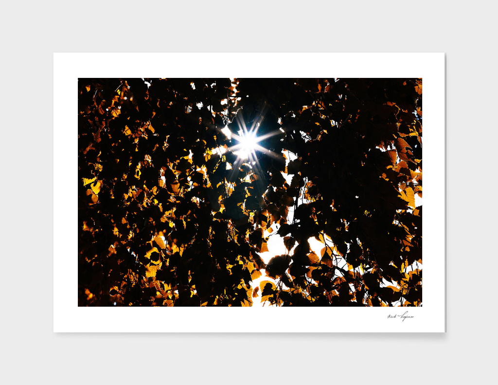 Autumn leaves with light leak