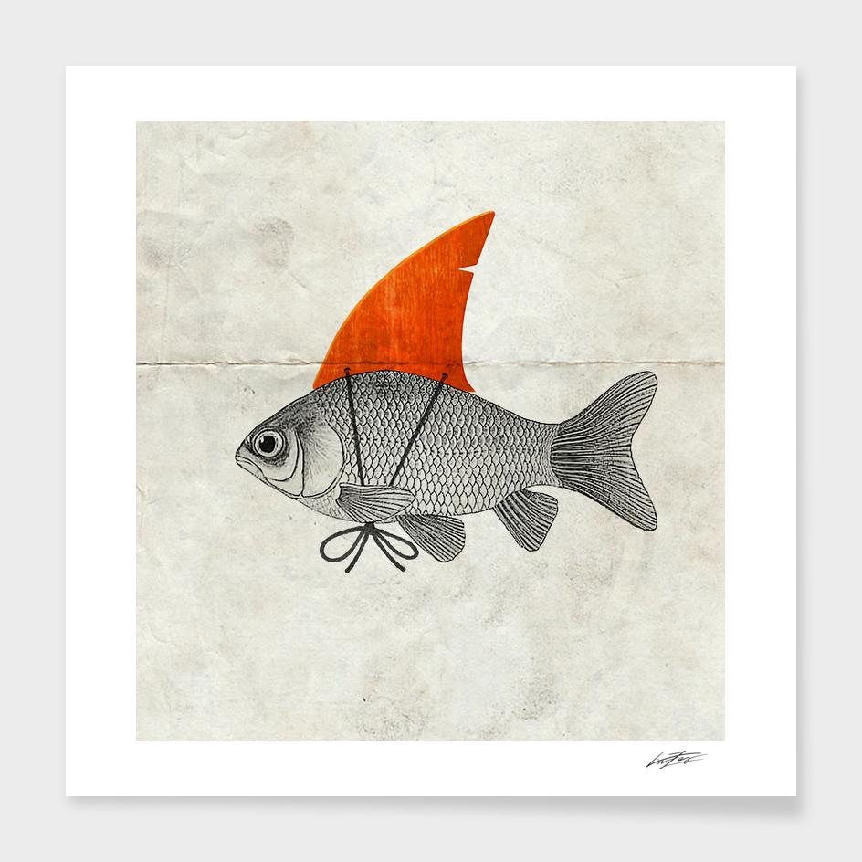 Goldfish with a Shark Fin