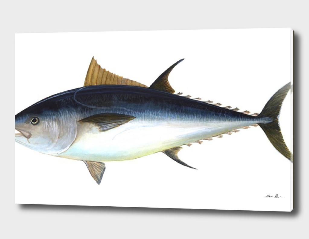 Vintage Bluefin Tuna Illustration