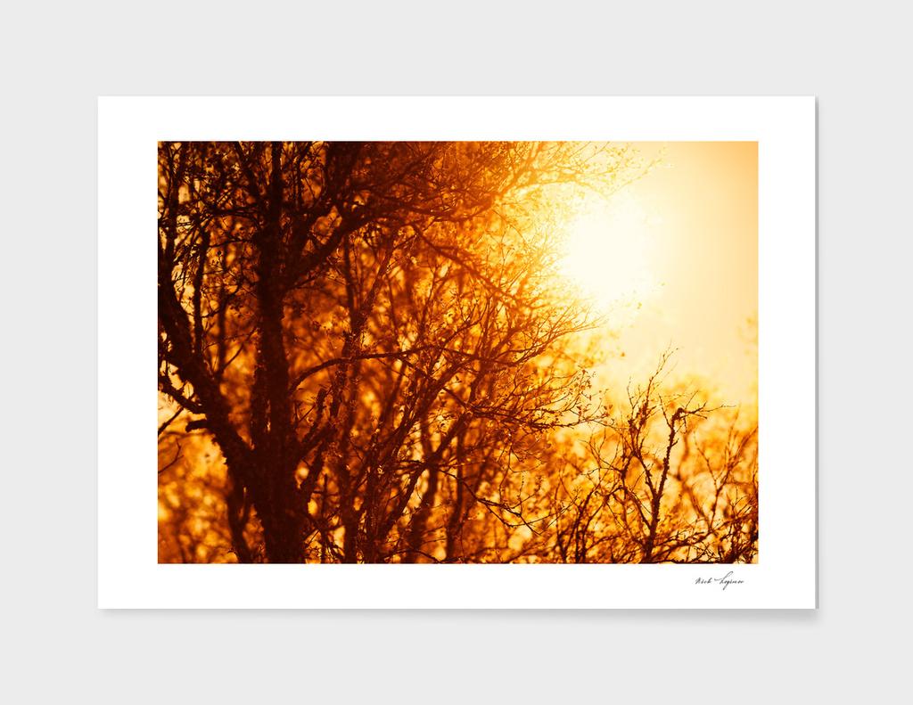 Golden sunshine tree