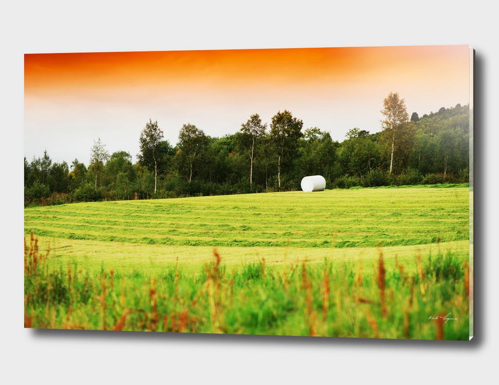 Autumn farm field