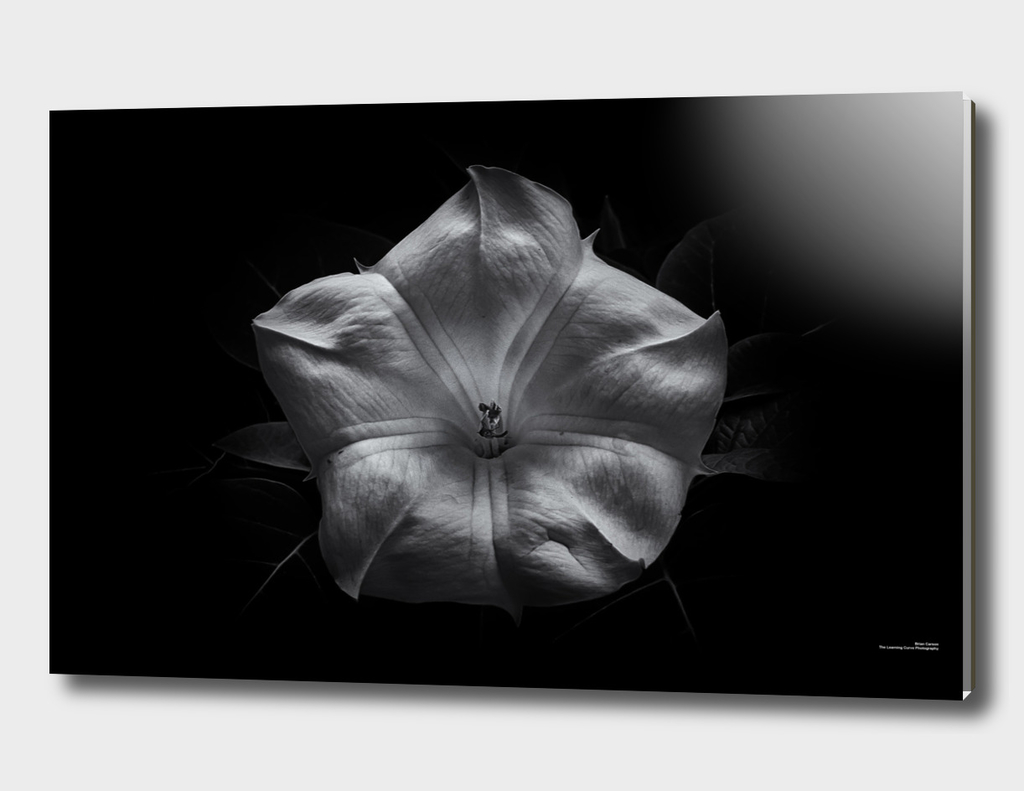 Backyard Flowers In Black And White 24