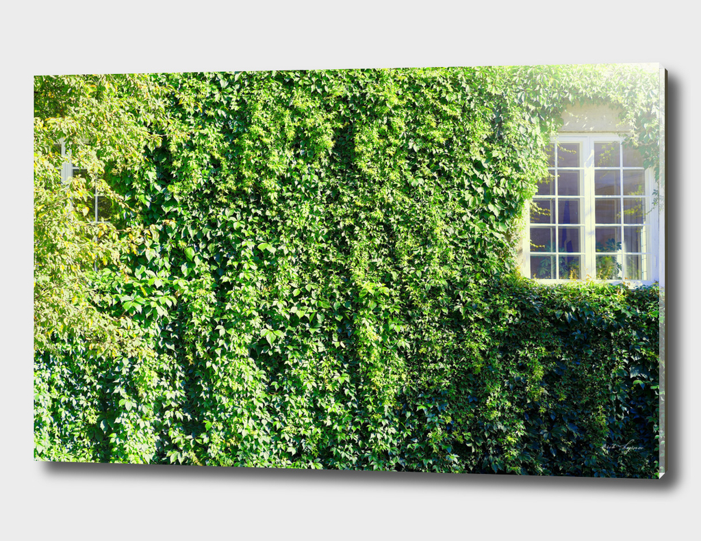 Green hedge window