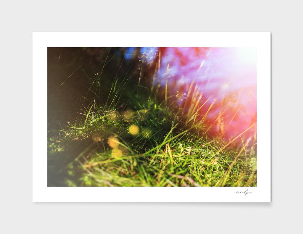 Grass with dramatic light leak