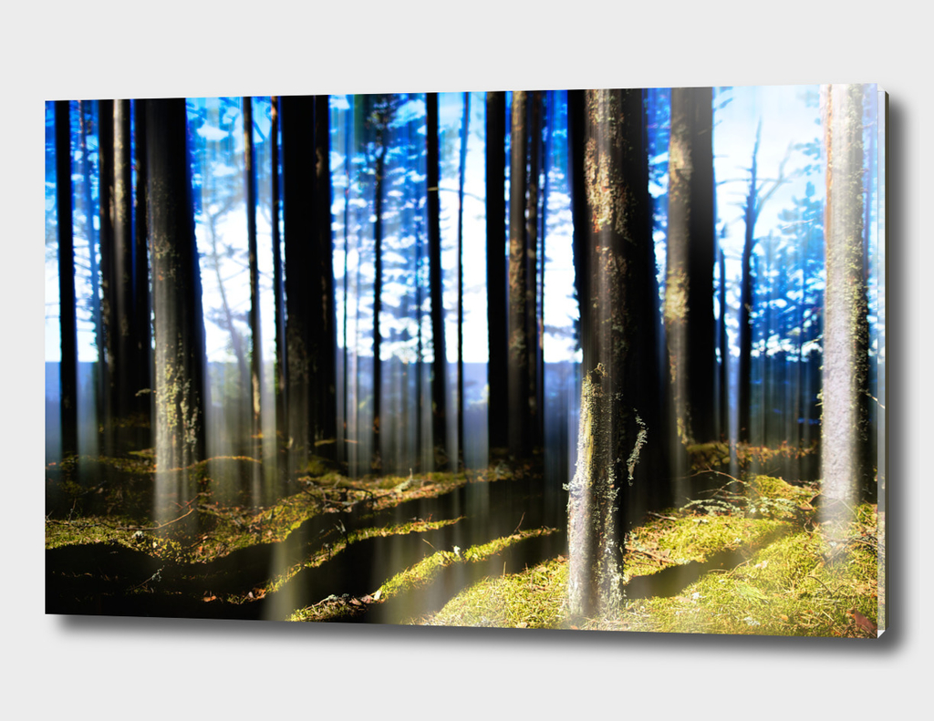 Dramatic light in wild forest