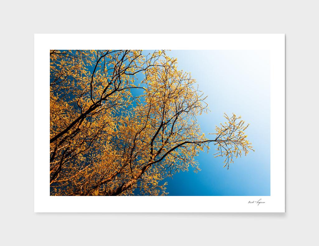 Diagonal autumn tree branch