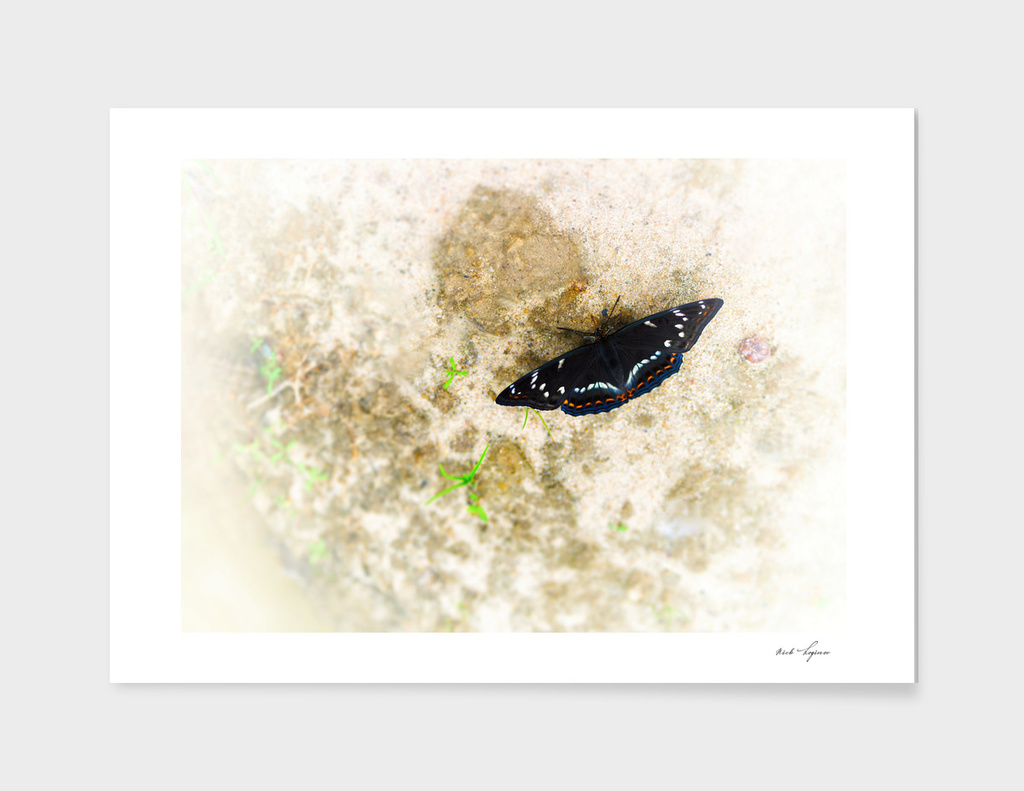 Dramatic black butterfly