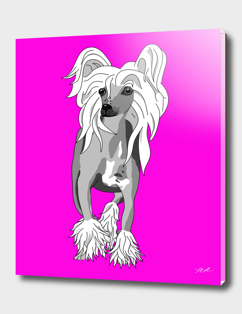 Sassy Chinese Crested