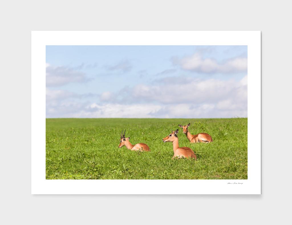 Buck Wildlife Summer