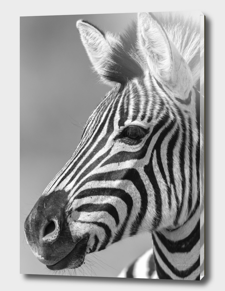 Zebra Head Black White