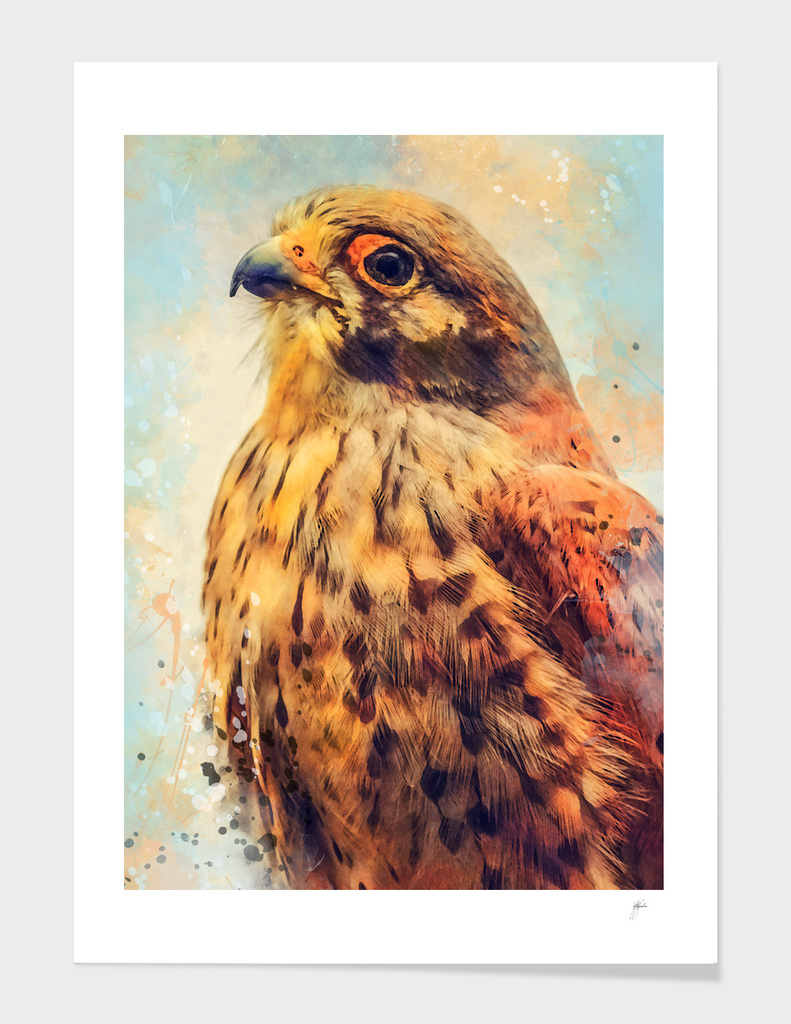 animal kestrel art