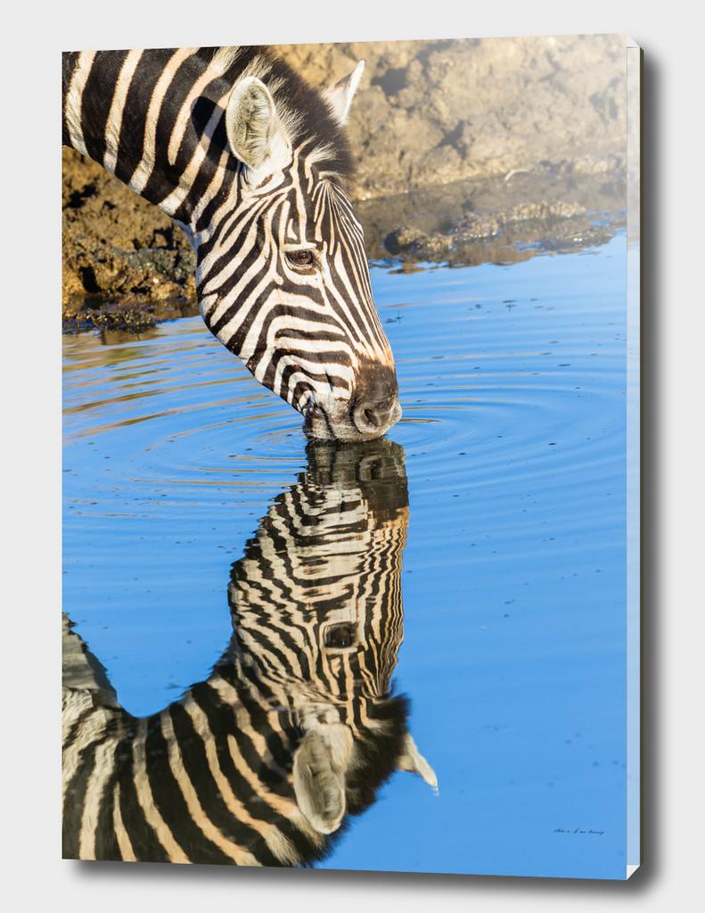 Zebra Drinking Mirror Double