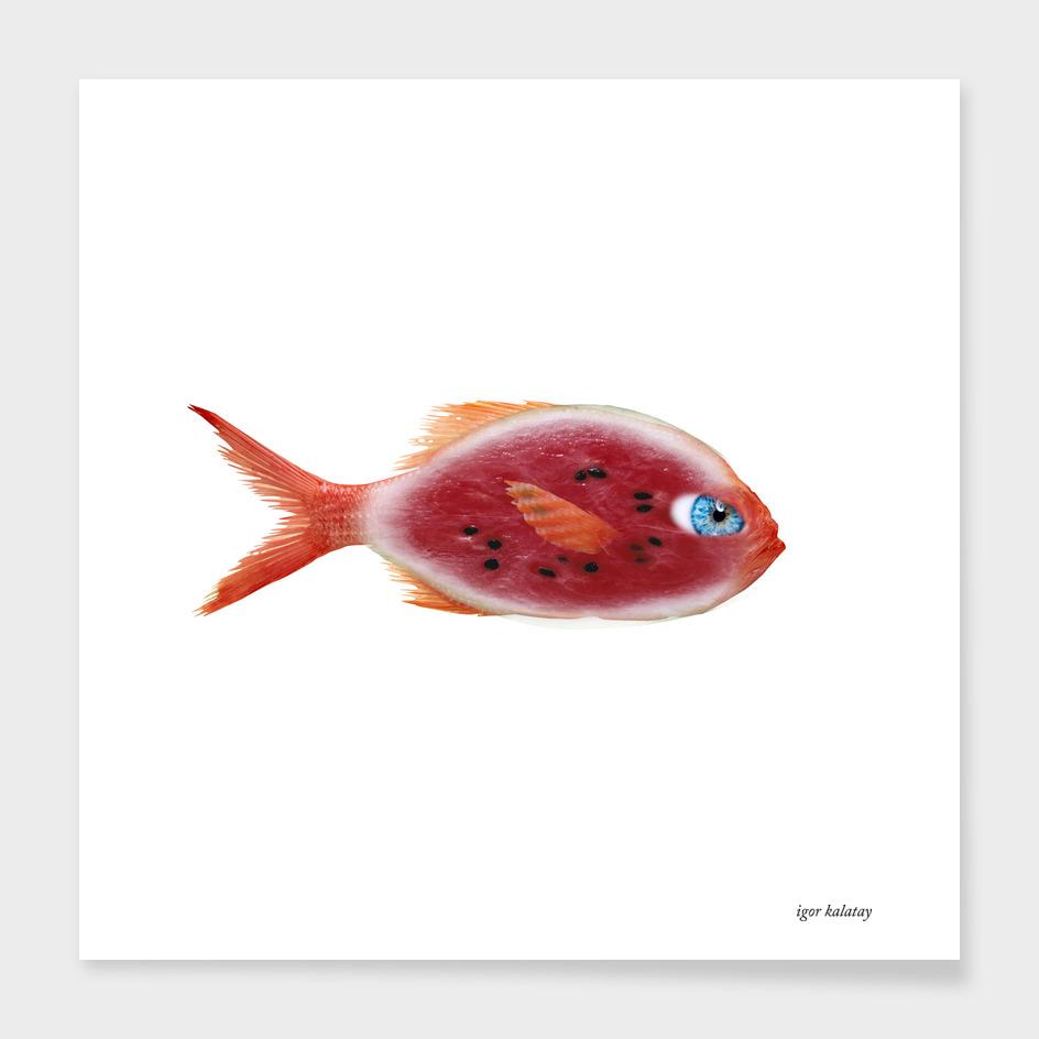 fish watermelon