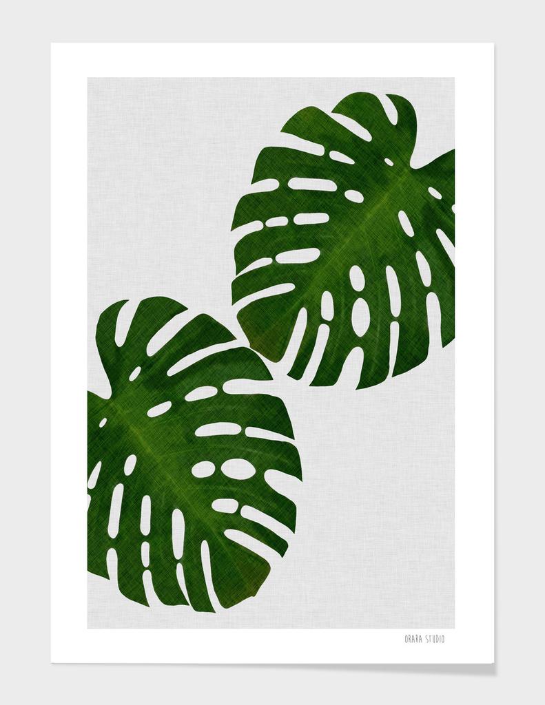Monstera Leaf II