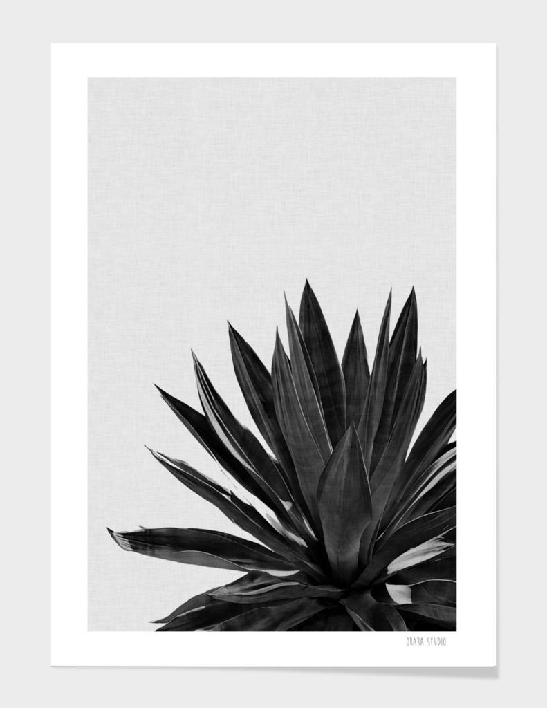 Agave Cactus BW