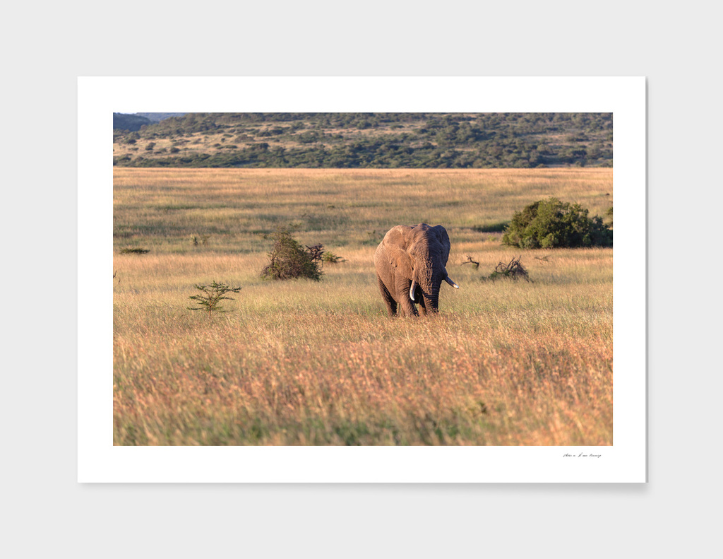 Bull Elephant Wilderness