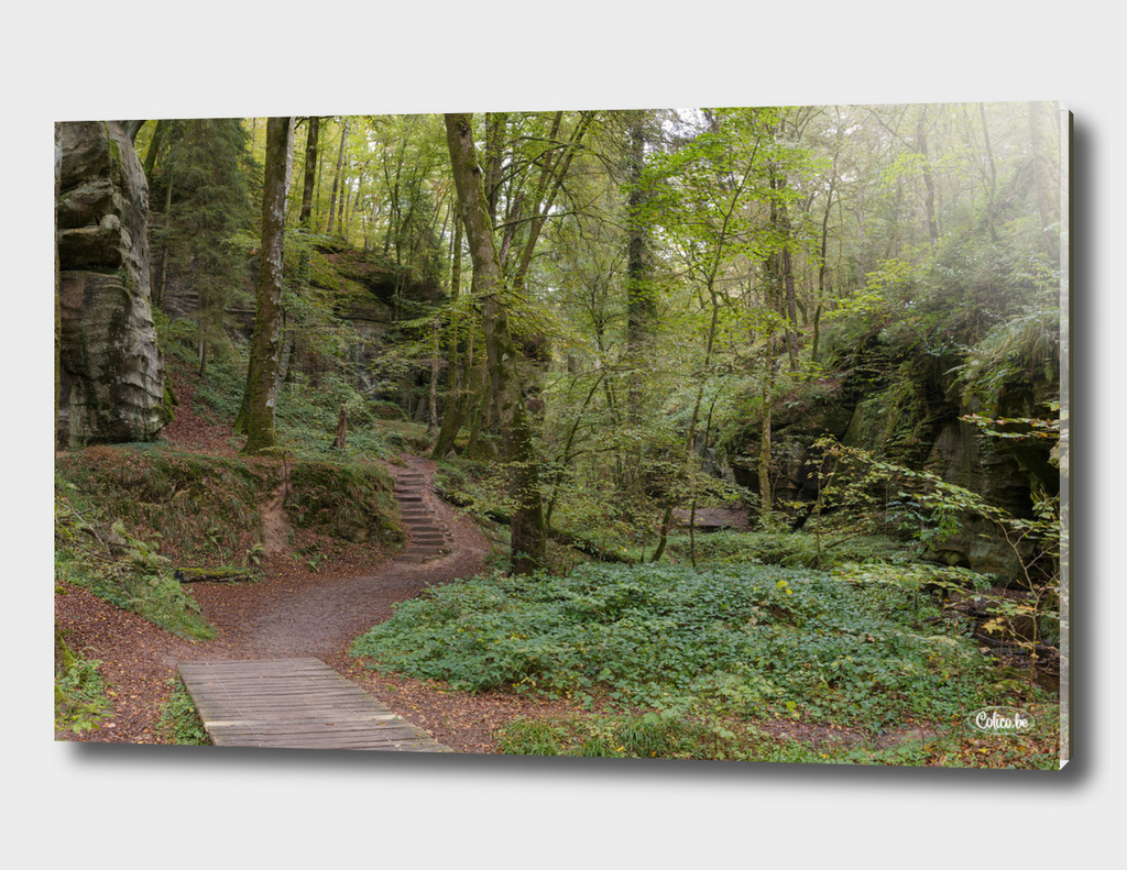 Hiking path forest