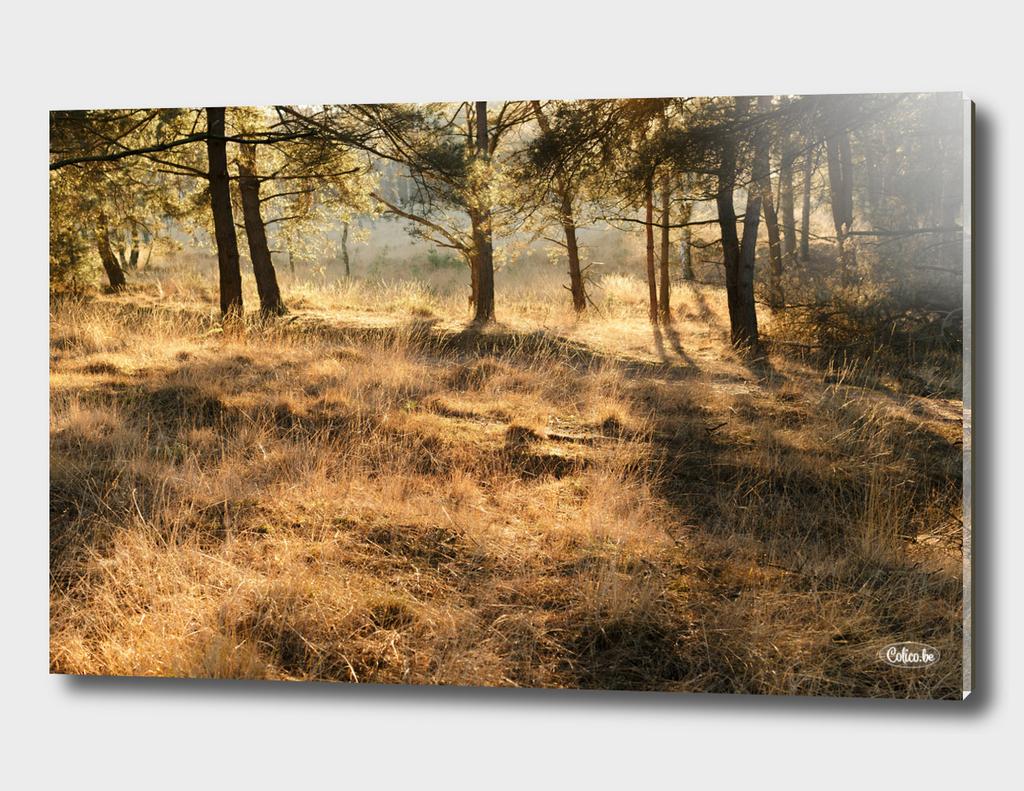 Heathland winter