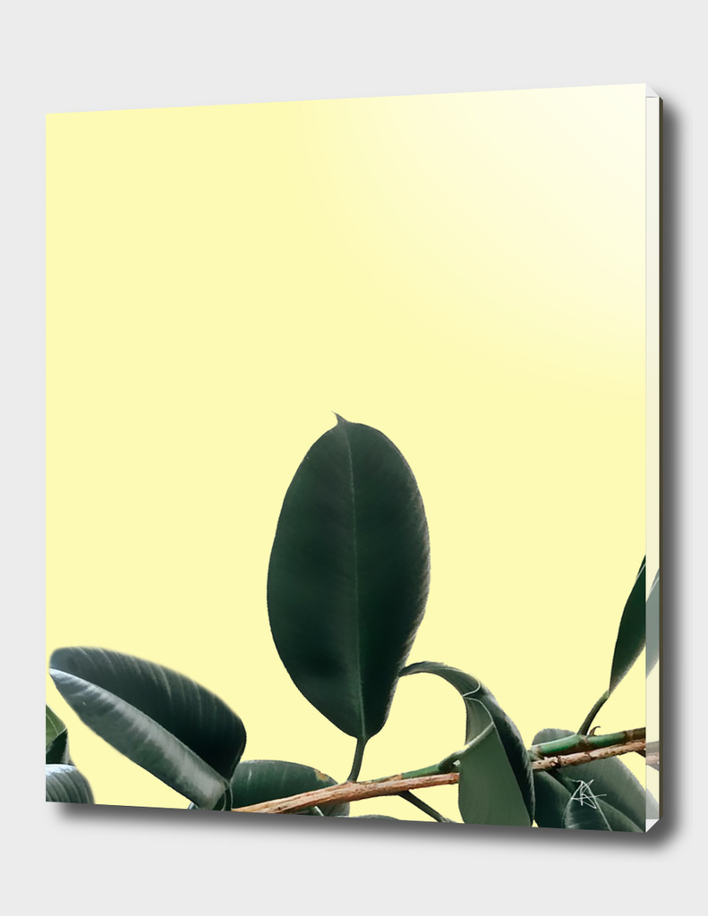 ficus elastica the nature series